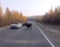 Moose Makes Incredible Maneuver To Prevent Collision With Cart