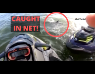 Florida Jet Skier Saves Dolphin Caught In Net