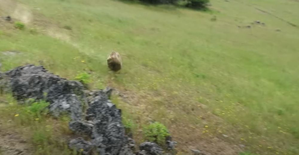 Rolling Boulder The Size of an NBA Point Guard Obliterates Oak Tree