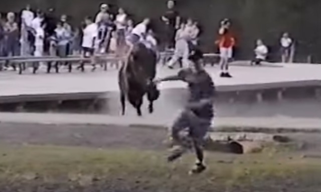 Start Your Day With That Time A Bison Charges Tourists at Old Faithful in Yellowstone