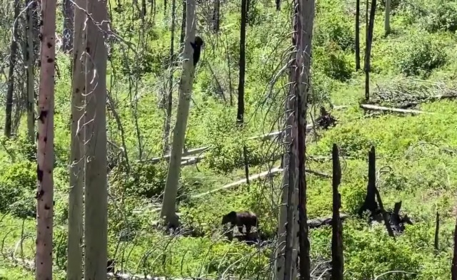 VIDEO: Hungry Grizzly Confronts Black Bear @ Glacier National Park