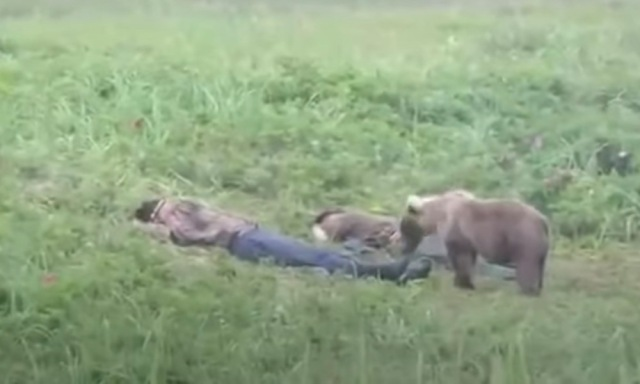 Brown Bear Wakes Up Passed Out Man Who Had Too Much To Drink