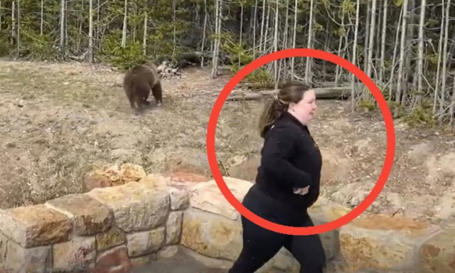 Yellowstone Visitor Who Went Viral After Charged By Grizzly Identified (Cited For Intentionally Disturbing Wildlife)