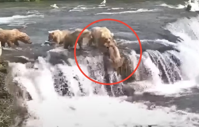 (Graphic Warning) Mother Bear Attacks Fish Stealing Competitor