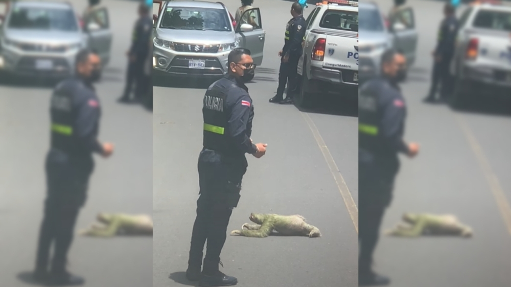 Police Stop Traffic So Sloth Can *Slowly* Cross Road