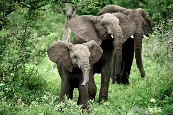 Elephant Kills Poacher In South African National Park